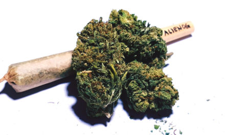 Latest Science Debunks Claim That Marijuana Significantly Harms Brain